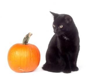 halloween-black-cat-with