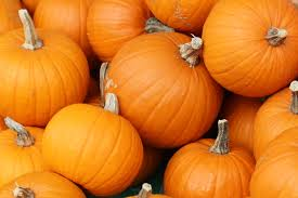jacob pumpkins