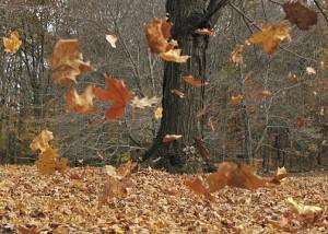 blowing-leaves