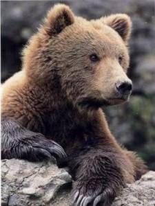bear in den