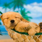 a-sleeping-summer-puppy