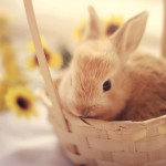 151-Cute-Easter-Bunny-Pictures-111