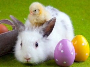 easter_bunny_chick