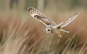 cool owl